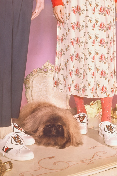 gucci-chinese-new-year-capsule-collection-17